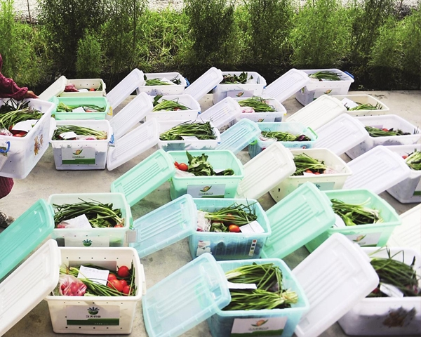 小区蔬菜配送